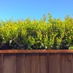 green and eco-conscious fence